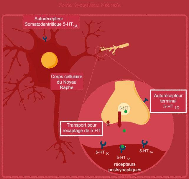 fonctionnement-du-cerveau-depression